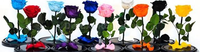 Роза в колбе стеклянной, вечная неувядающая живая стабилизированная: что это такое, фото и описание, производители nottabelle и vermont, а также как ухаживать?