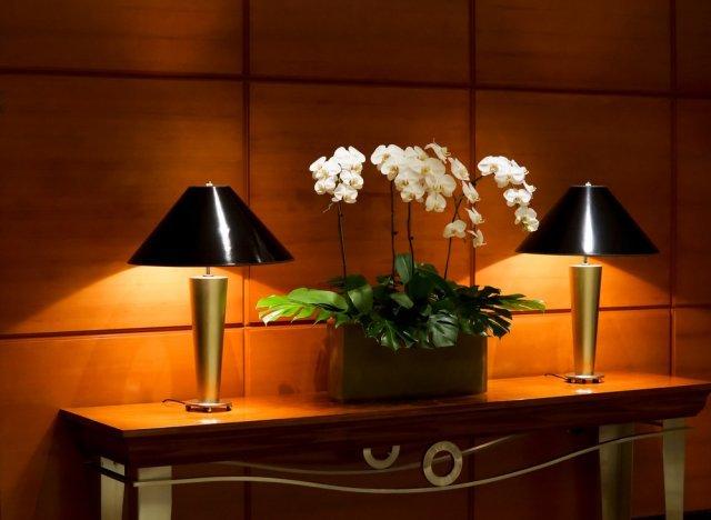 Не цветет орхидея: что делать, если растут только корни и листья, в чем причина пустых стрелок, как ухаживать, фото больного растения