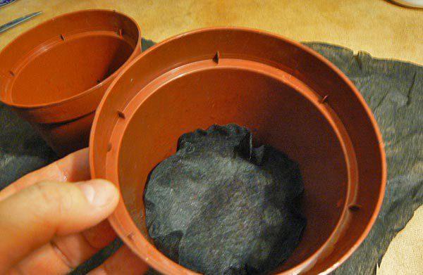 Глициния из семян: как правильно сажать и выращивать в домашних условиях, а также фото того, как выглядит посевной материал, плюсы и минусы такого товара из Китая