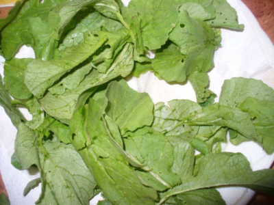 Ботва редиски: полезные свойства и противопоказания, химический состав, а также можно ли есть листья, какую пользу и вред  приносят, как применять?