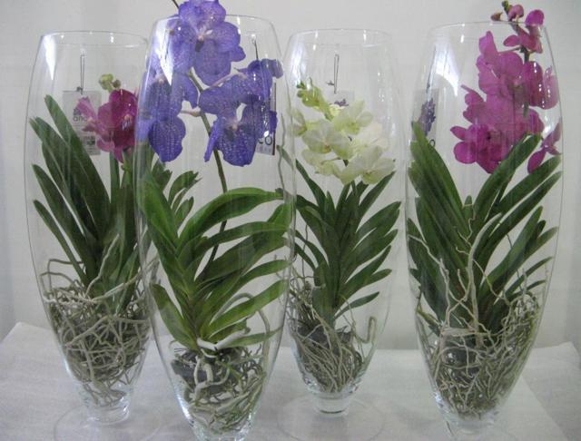 Орхидея в колбе: что это такое, какие необходимы условия для выращивания цветка из фласки, нужно ли пересаживать и как можно это сделать?