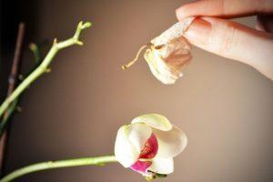 Желтеет цветонос у орхидеи: почему это происходит и что делать?