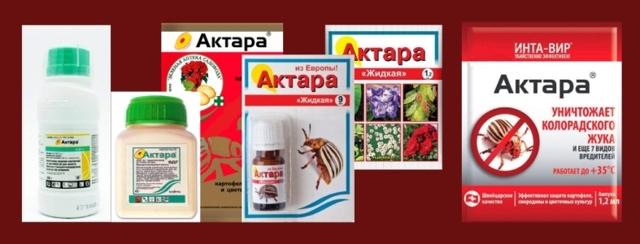 Как обработать орхидею Актарой: что это такое и как правильно развести инсектицид, а также основные меры предосторожности при использовании препарата