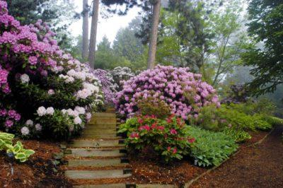 Когда пересаживать азалию и как: можно ли осенью, в октябре, или лучше это сделать весной, а также допустимо ли перемещать на другое место цветущий рододендрон?