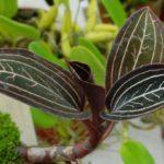 Золотая орхидея: описание сорта и фото цветка, а также условия содержания растения
