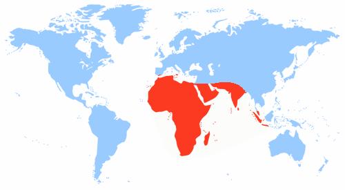 Виды и сорта сансевиерии: описание и фото