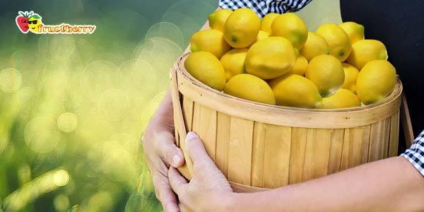 Польза лимона, а также в чем вред для здоровья человека, какие лечебные свойства у экстракта, сока с медом, каково действие на детей, как влияет на организм женщины?