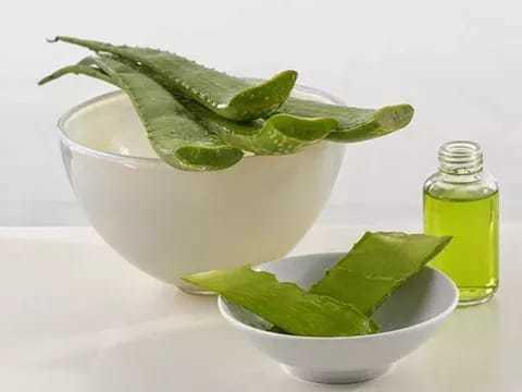 Каланхоэ в нос: лечебные свойства сока, можно ли капать спиртовой раствор, как приготовить смесь в домашних условиях и использовать готовые аптечные настойки