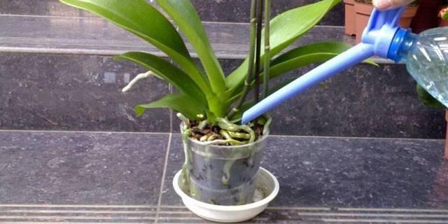 Когда пересадить орхидею в домашних условиях в горшок: можно ли делать это после покупки в магазине, какое время года лучше всего, пошаговые фото процесса
