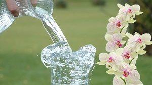 Как поливать орхидею в домашних условиях правильно: чем и какой водой, чтобы она цвела, пошаговый уход за растением на фото, методы и ошибки