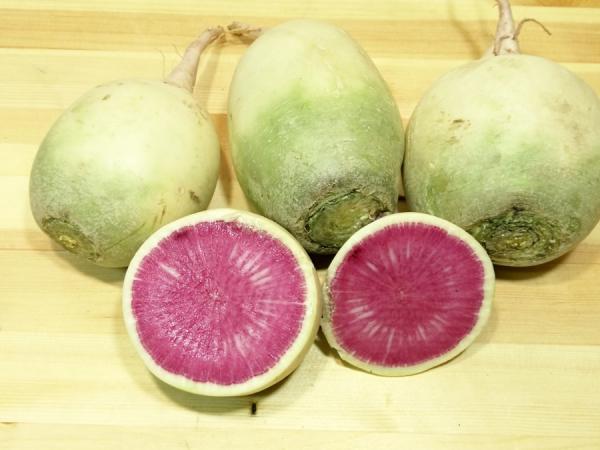 Арбузная редька: характеристика и описание сорта, его достоинства и недостатки, полезные свойства и вред корнеплода, нюансы выращивания, а также фото овоща
