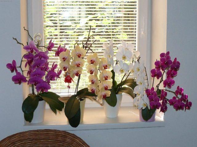 Как вырастить орхидею из семян из Китая в домашних условиях: можно ли так делать и как правильно сажать, а также фото того, как они выглядят