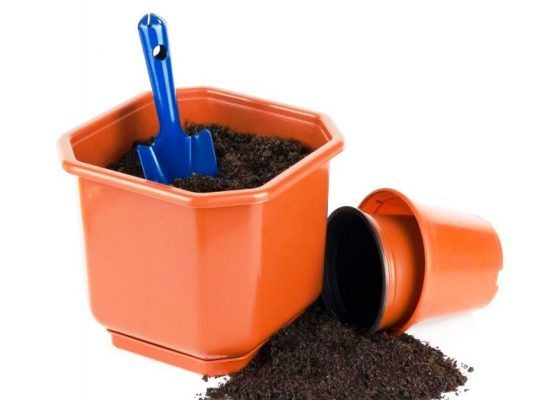 Грунт для азалии: какая по составу и кислотности земля нужна для посадки рододендрона в домашних условиях, подойдет ли почва для других цветов, например, антуриума?