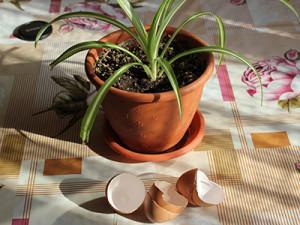 Грунт для комнатного граната и уличного: какой нужен состав и как выбрать готовую почву, а также, чем удобрять и как подкармливать растение в домашних условиях?