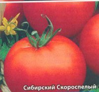 Сорта редьки: описание всех лучших видов овоща для выращивания в Сибири и других регионах с названием и фото, важность правильного выбора и цены на семена