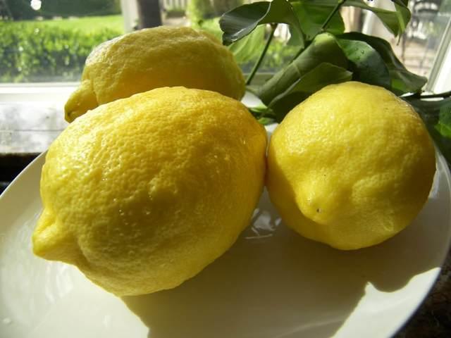Лимон Пандероза: описание внешнего вида с фото, правила ухода за растением в домашних условиях, а также советы по выращиванию в грунте