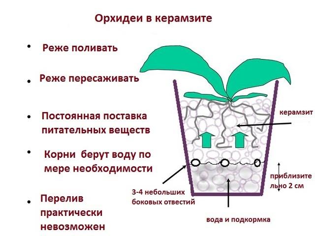 Нужен ли для орхидеи дренаж: что это, какой лучше, можно ли совершать посадку в керамзит и как правильно это делать?