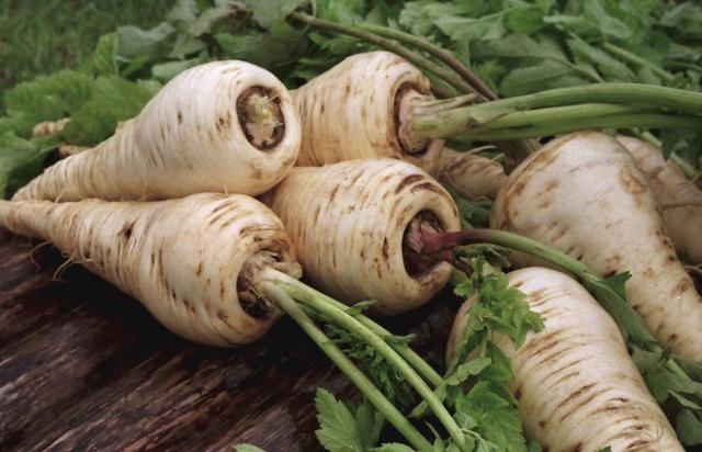 Применение пастернака посевного в лечении ожогов и иных недугов: каковы свойства овоща, его фармакогнозия, калорийность, в чем польза и вред, а также фото растения