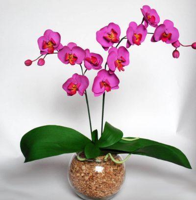 Как пересадить детку орхидеи в домашних условиях, если она дала отросток на цветоносе или корне, сколько ухаживать после процедуры - пошаговое пособие и фото