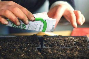 Выращивание в домашних условиях алоэ вера: выбор почвы, как посадить семенами, размножать листом без корня или порослью, что делать, если цветок не приживается?
