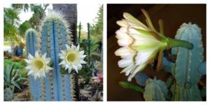 Виды кактусов: все фото и русские названия комнатных растений из семейства с длинными иголками и листьями, домашний уход за цветами, какие бывают декоративные сорта?