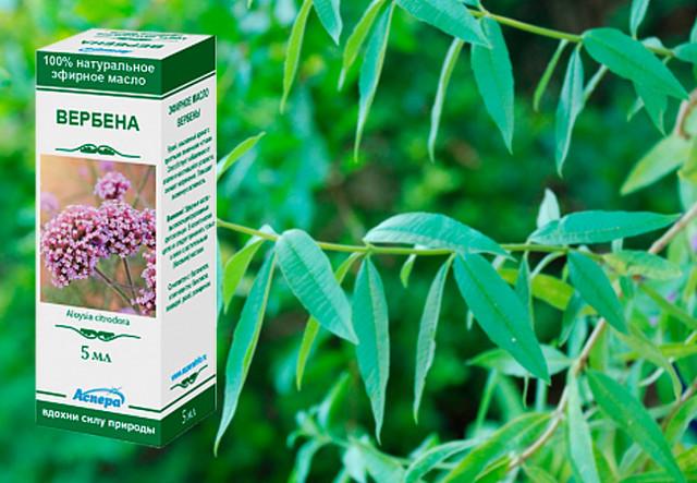 Лечебные свойства травы вербены: рецепты полезных настоек и иных лекарственных средств, способы применения для волос, а также возможный вред и противопоказания