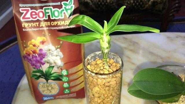 Грунт для орхидей: Эффект Био, Цеофлора, Черное золото, Серамис, kekkila, geolia, Велторф, Фаско, а также плюсы и минусы покупной готовой почвы.