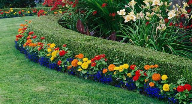 Герберы: посадка и уход в саду и в домашних условиях, фото