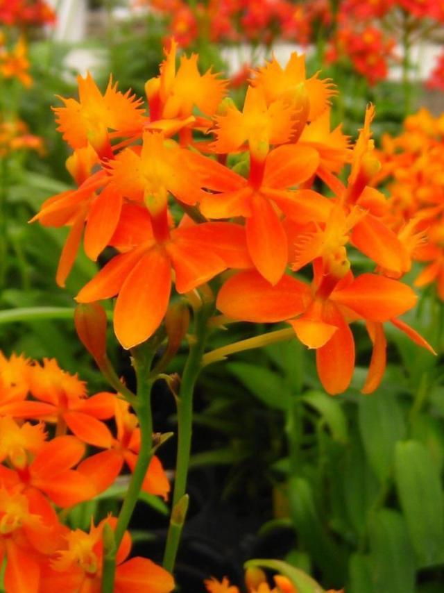 Корни орхидеи: как они выглядят на фото, их строение, виды, тип здоровой системы цветка, а также советы, как за ними ухаживать в домашних условиях