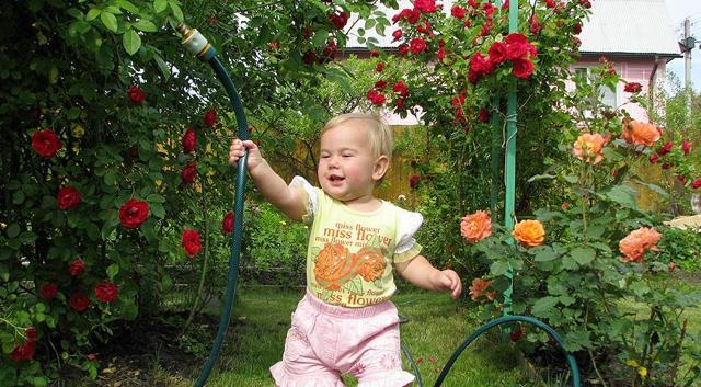 Посадка и уход за плетистой розой в открытом грунте: как правильно размещать цветок весной рядом с клематисом, советы по выращиванию для опытных садоводов и новичков