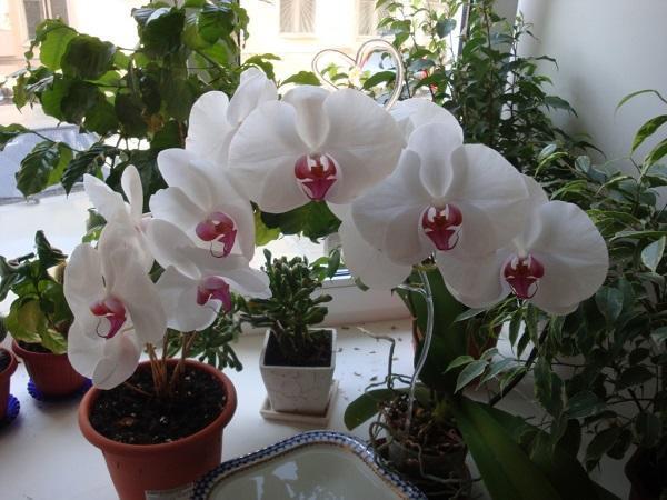 В орхидеях завелись белые жучки в грунте: как распознать, что за мошки поселились в земле и на растении и как избавиться от мелких букашек?