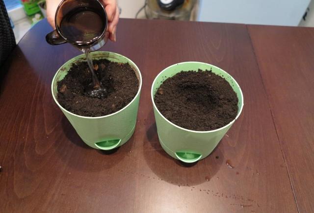 Грунт для глоксиний: как правильно выбрать почву, горшок и как самостоятельно приготовить нужный состав земли?