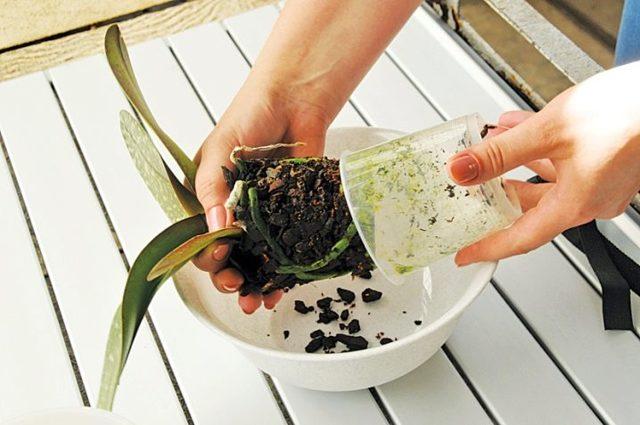 Грунт для орхидеи: какой должен быть состав для выращивания комнатного растения, необходимые требования к смеси, что лучше подойдет и в чем отличие от земли и почвы?