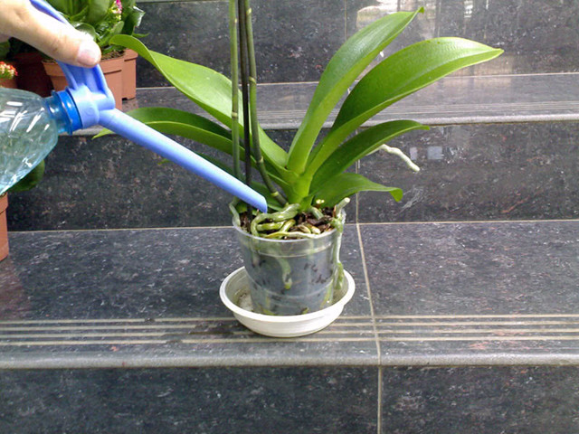 Орхидея Ванда: фото сортов, особенности посадки и выращивания, уход за растением в стеклянной колбе в домашних условиях, как заставить цвести голубой и синий виды?