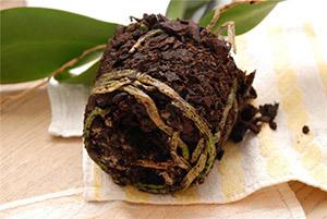 Горшок для пересадки орхидей: во что переместить цветок в домашних условиях, какую кору можно использовать для этого и что ещё нужно?